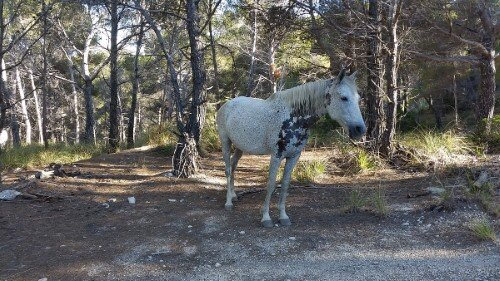 Horse at the woods near Cala Matzocs